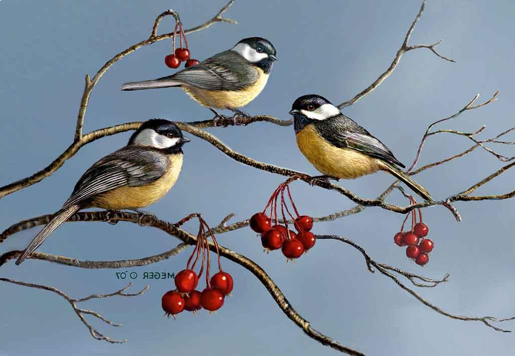 Chickdees, Maine State Bird   Hi-Look Online