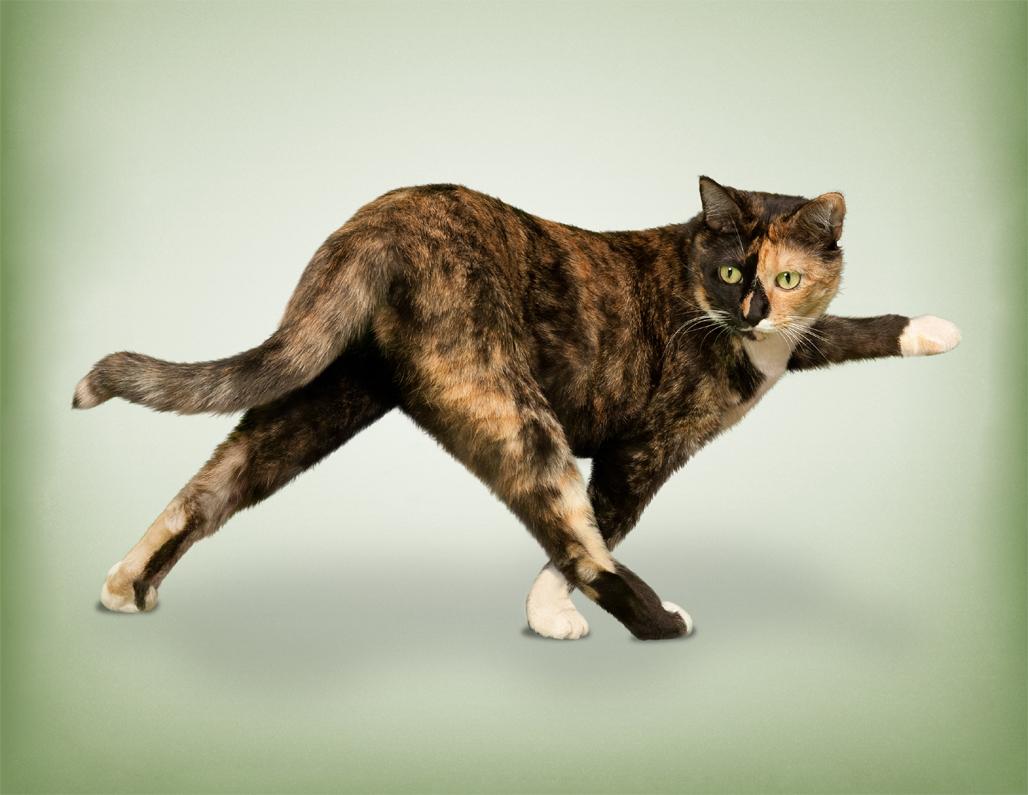 фото животных в необычных позах правильно написать претензионное