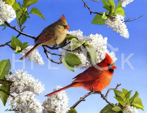 cardinals illinois state bird hi look online